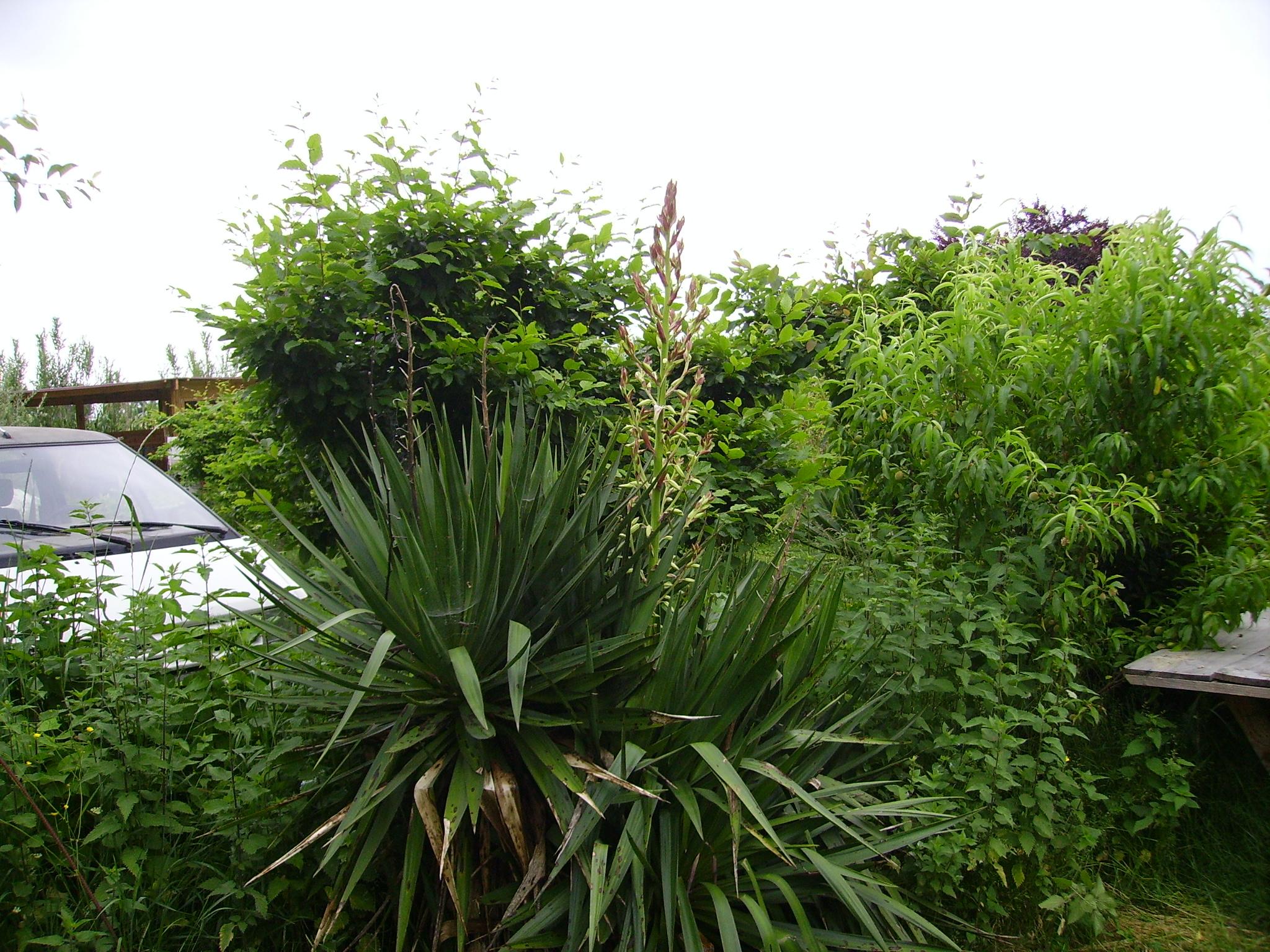 Terre plante et jardin archive at bois fer pierre terre for Plante et jardins